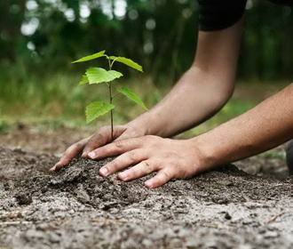 «Утро с Интером»: семья из Бразилии высадила 2 млн деревьев и превратила пустырь в тропический лес