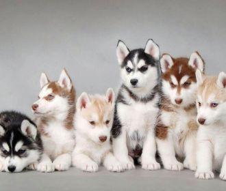 Зеленский подписал ужесточение наказания за жестокое обращение с животными