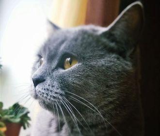 Ученые выяснили, как коты влияют на дистанционную работу хозяев