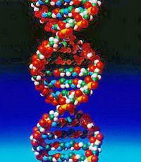 Ученые научились делать фигуры из молекул ДНК