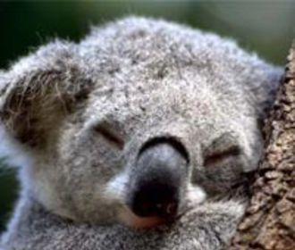 Высокоточные бюджетные коалы