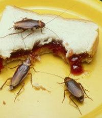 Ученые выяснили личностные характеристики тараканов