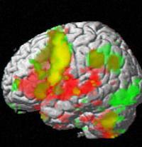 Самые популярные мифы о мозге