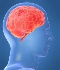 Чувствуя любовь и заботу, мозг меньше реагирует на угрозу