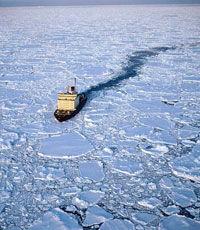 Ученые доказали, что водоросли ускоряют таяние льда в Арктике