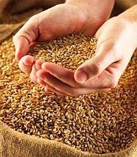 Украина планирует экспортировать до 22 миллионов тонн зерна
