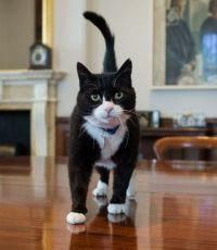 Глава МИД Британии заверил парламент, что нанятый кот - не шпион