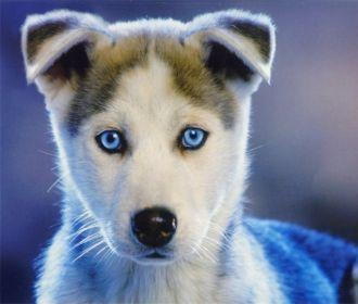 Ученые доказали исключительную пользу домашних животных