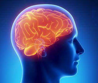 Ученые призвали людей пожертвовать свой мозг науке
