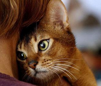 Владельцы котов чаще грустят - ученые