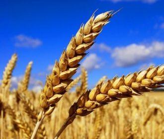 Украина к 5 сентября намолотила почти 35 млн. тонн зерновых и зернобобовых