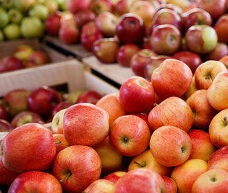 На Украине рекордно подешевели яблоки
