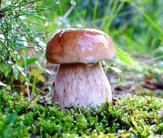 Диетологи: не стоит в день съедать более 150 граммов грибов