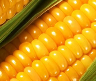 Необычная кукуруза обещает заменить собой таблетки