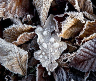В ближайшие дни будет холодно и без осадков