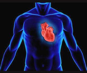 Впервые был создан атлас клеток сердца человека
