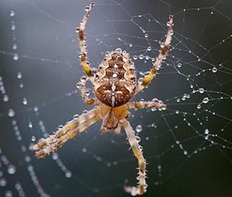 Яды пауков использовали для лечения хронической боли