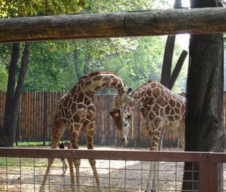 В субботу откроется киевский зоопарк