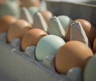 Яйца Бахматюка и НАБУ
