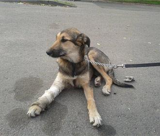 Киев планирует построить центр защиты животных