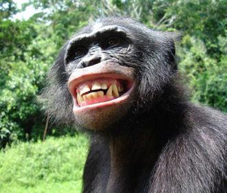 Китайские ученые впервые клонировали пять обезьян