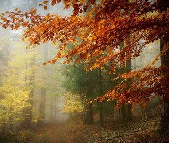 В Украине в ближайшие дни сохранится теплая погода