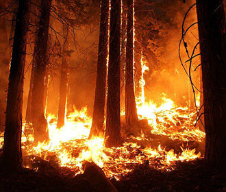 На Украине насчитали 30 масштабных лесных пожаров