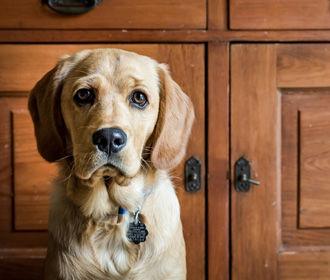 Кости и лакомства для поощрения собак