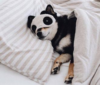 Ученые установили количество сна, продлевающее жизнь