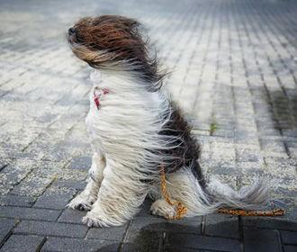 Украину ждет похолодание и сильный ветер