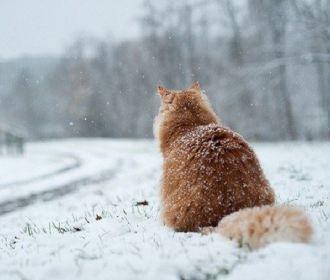 В ближайшие сутки местами ожидается небольшой мокрый снег