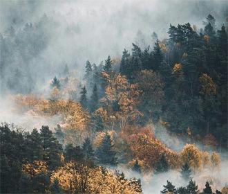 В Украине массово усыхают леса