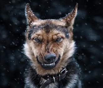 В Украине в ближайшие дни будет прохладно, местами пройдет снег с дождем