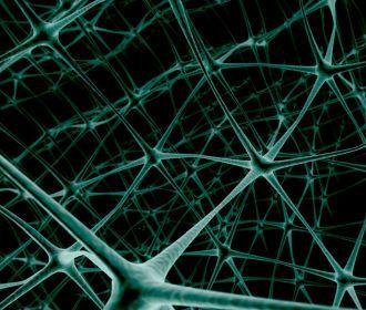 Холестерин связали с развитием смертельного заболевания нервной системы