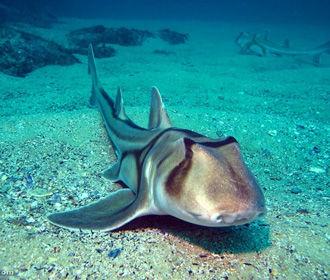 В США воры украли акулу из океанариума и попытались продать