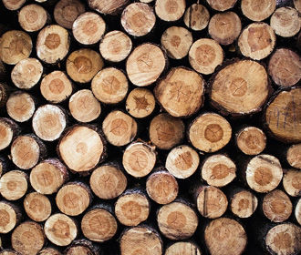 Рада отменила мораторий на экспорт леса-кругляка