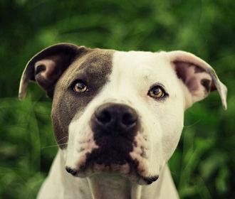 """Ученые назвали """"грустные глаза"""" собак манипуляцией"""