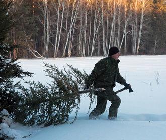 Украинцев предупредили, что бывает за незаконную вырубку елок
