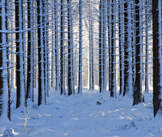 На Украине в ближайшие дни сохранится морозная погода