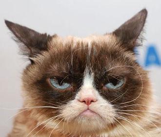 Умерла кошка-мем Grumpy Cat