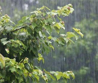Кратковременные дожди с грозами идут в Украину