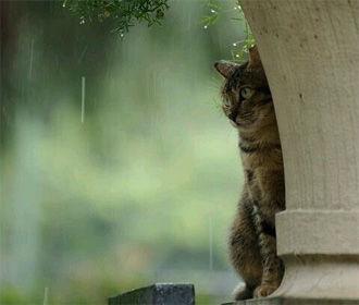 В первый день мая в большинстве областей Украины пройдут дожди