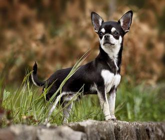 Информация о Royal Canin Украина – отзывы ветеринарных врачей и покупателей