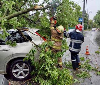 Последствия непогоды в Киеве: деревьями завалило 15 авто