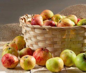 Специалисты советуют не увлекаться яблоками