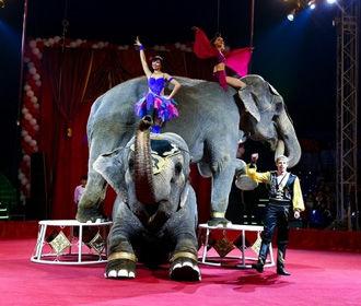 В Чехии парламент запретил цирки с животными