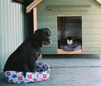 Домашние собаки стали заражаться коронавирусом