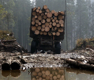 В Украине проведут инвентаризацию лесов впервые с 1996 года