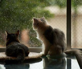 Украина вступит в лето с дождливой погодой