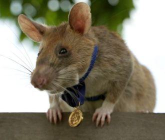 В Британии сумчатая крыса получила аналог высшей награды